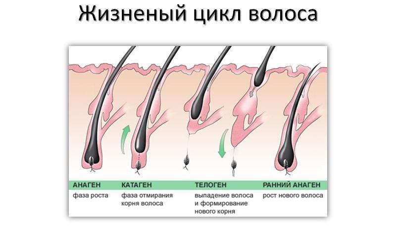 как отрастить брови